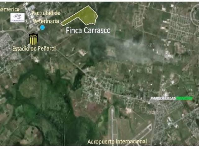 FINCA CARRASCO